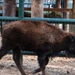 Convenios favorecen la conservación y preservación de las especies