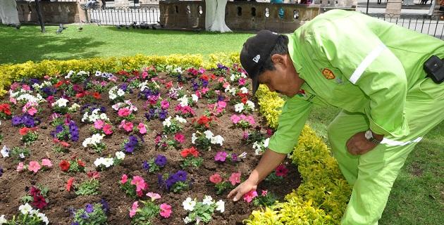 Embellecen reas verdes de morelia con 8 mil 900 nuevas for Algunas plantas ornamentales