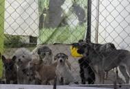 """De acuerdo con las organizaciones protectoras de animales, es una falsedad el impulso tan publicitado a estas áreas; siendo que el grueso del presupuesto se va a sacrificio, definiendo la labor del Centro como mero """"Control Animal"""""""
