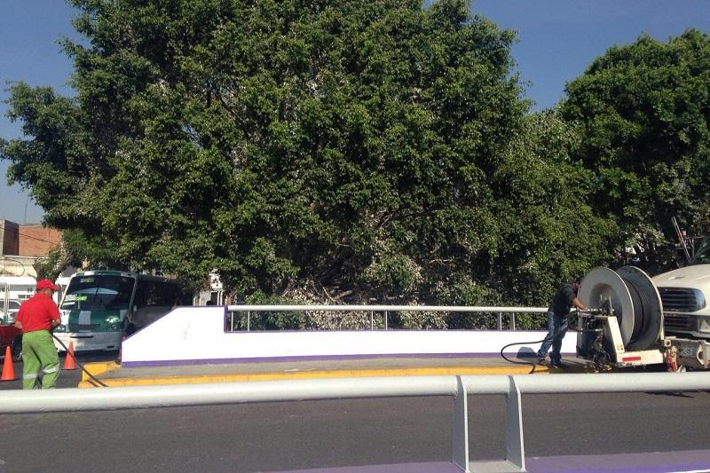 En diversos puntos de la ciudad se han identificado árboles invadidos por garzas