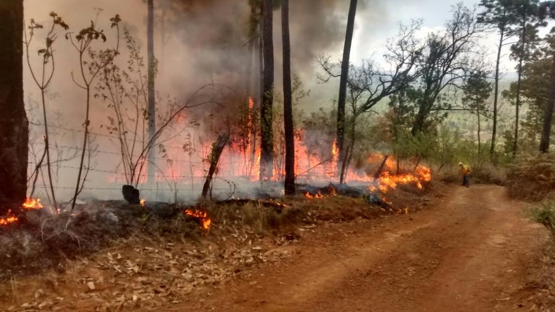 Las acciones implicaron los trabajos de 77 combatientes: 24 del Ayuntamiento de Morelia, nueve de la COFOM y 44 de la CONAFOR