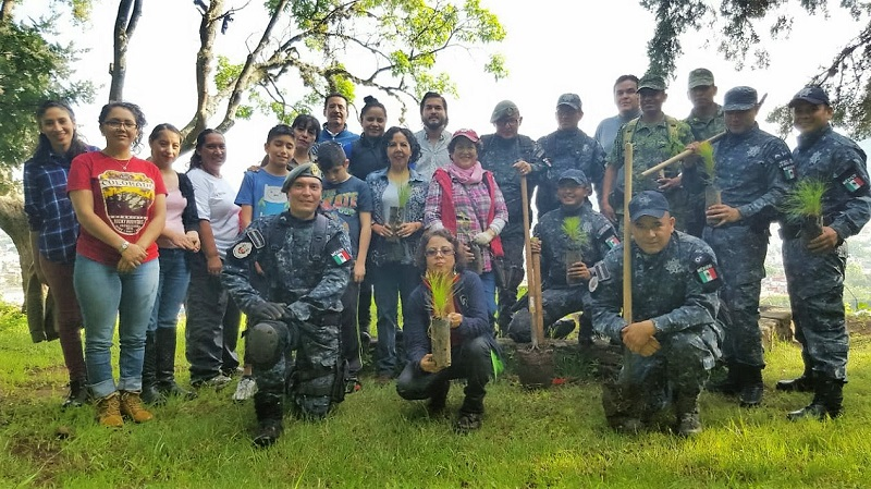 En esta faena, se reforestaron más de mil plantas de pino michoacano, encino y parotilla, especies que son endémicas de esta la región y que servirán para ayudar a preservar el sitio