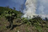 La Sedena realizó un operativo en el cual fue incinerada una superficie de 5 mil 726 metros cuadrados de marihuana