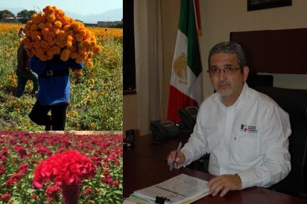 Durante esta temporada se comercializarán 993 mil manojos de flores, como pata de león, nube, gladiola y cempasúchil