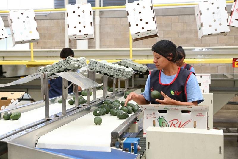 Arriola Peñalosa destacó la labor del mandatario estatal en la generación de empleos, de los cuales la mayoría son en el sector primario