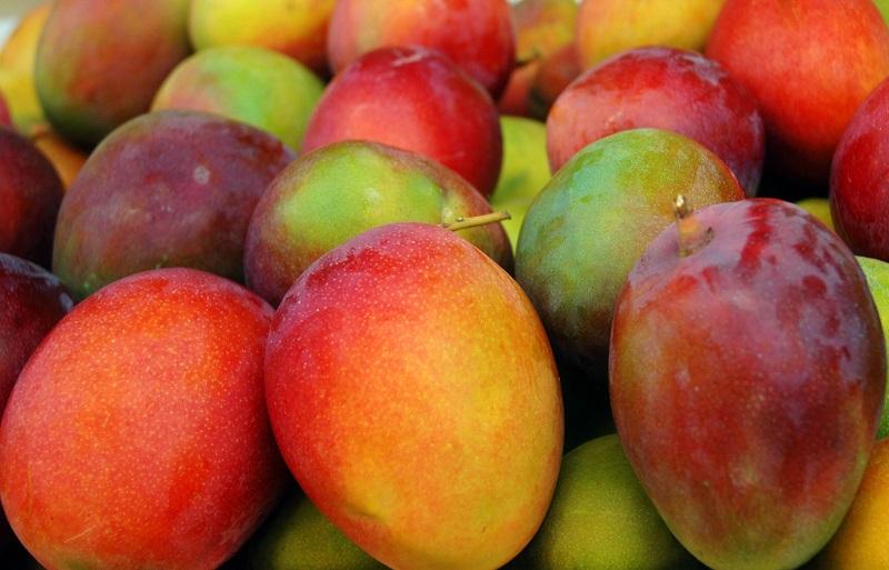 El sector genera un millón 600 mil jornales en una superficie de 20 mil hectáreas cultivadas del fruto; existen 3 mil 250 hectáreas de mango orgánico, señala