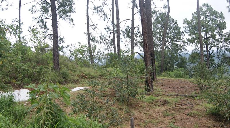 El director general de la Comisión Forestal del Estado, Roberto Pérez Medrano, dijo que derivado de lo anterior, se tienen 163 notificaciones de saneamiento