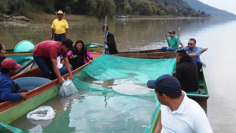 La Acúmara se encuentra dentro del grupo de peces nativos con alto potencial para la Acuacultura, debido a su alto valor nutricional, sabor e importancia económica logrando en el mercado local y regional un precio por kilo de hasta $140 pesos o más