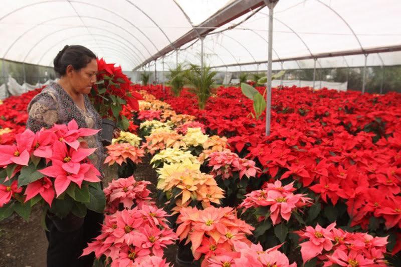 El responsable de la política agropecuaria de Michoacán, dio a conocer que la mayor porcentaje de la producción se comercializa en el centro del país, aunque ya existe mercado en otros estados del país