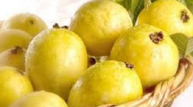 En Michoacán 6 mil 500 productores cultivan guayaba y la temporada más fuerte del fruto es en los meses de julio a octubre