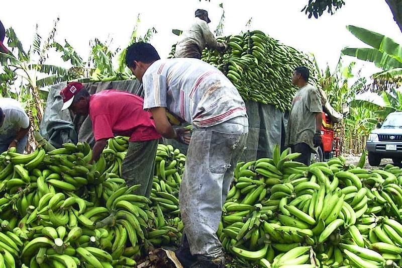 Se cuenta con un padrón de 400 productores quienes son promotores de empleos y desarrollo de la región costera de Michoacán y de la Tierra Caliente, principalmente