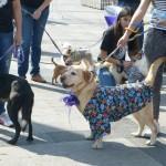 Es de precisar que en próximas fechas se llevará a cabo una segunda edición de la Feria para poner en adopción a los 28 canes restantes que continúan en resguardo por el Ayuntamiento capitalino