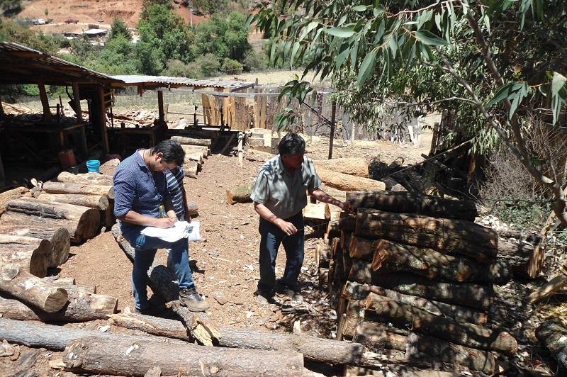 Así lo informó el director general de la Comisión Forestal del Estado de Michoacán (Cofom) Roberto Pérez Medrano