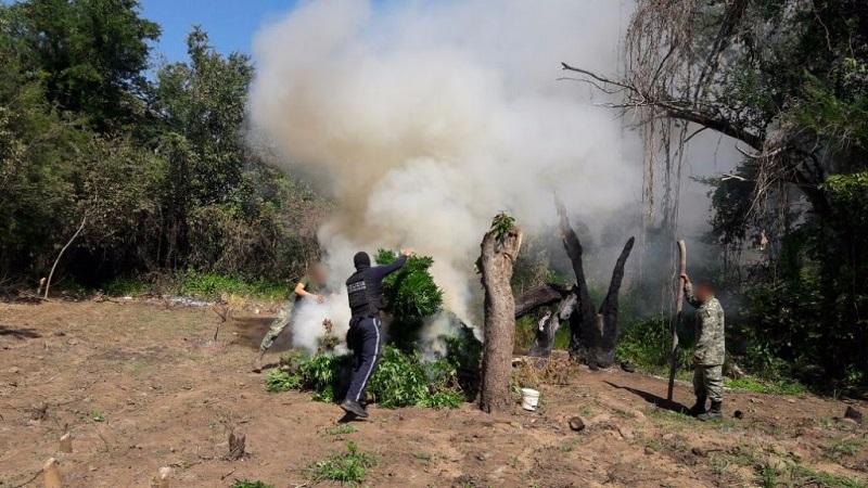 Los agentes procedieron a la incineración de la marihuana