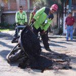 Se dio continuidad a las actividades de construcción del Colector Pluvial, abarcando calles como Primavera y Cóndor, así como la rehabilitación de algunas rejillas de la Avenida Madero Poniente