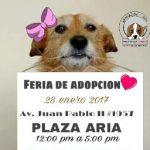 Eliminar la compra-venta ilegal de mascotas y promover la adopción, uno de sus objetivos