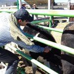 Gracias a las gestiones y coordinación del alcalde Alfonso Martínez y el gobierno estatal se logró obtener apoyo para arrancar el periodo de aplicación del paquete básico de vacunas y desparasitantes que prevendrán a los animales de ser atacados por enfermedades