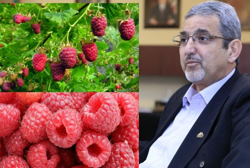 Michoacán, Jalisco y Baja California aportan el 98% de la producción; México, el quinto productor mundial del fruto