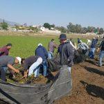 Aparte de los 100 trabajadores de la Dirección de Residuos Sólidos que intervinieron en la limpieza, el Ayuntamiento apoyó con 15 camiones para el retiro del desperdicio, un par de lanchas que fueron traídas desde el municipio de Pátzcuaro, así como los tambos de plástico que se usaron a manera de boyas