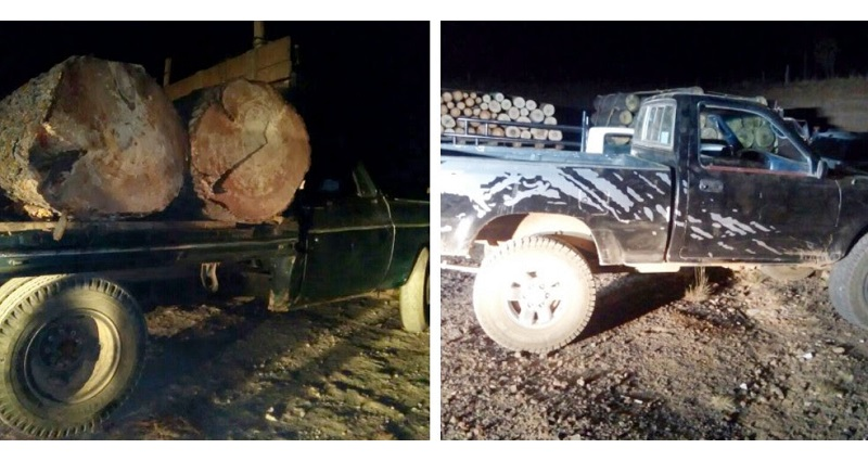 El detenido, la madera y vehículos fueron puestos a disposición de la autoridad competente