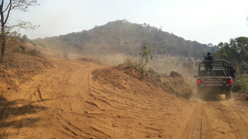 La Cofom ejerce sus funciones de inspección y vigilancia forestal desde hace 13 años