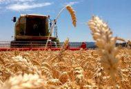 El responsable de la política agropecuaria de la entidad señaló que las 45 mil 527 toneladas que serán incentivadas a través de Agricultura por Contrato beneficia a mil 147 productores, quienes cultivaron 10 mil 091 hectáreas de trigo