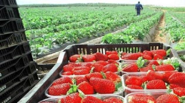 Michoacán, líder nacional con más del 80% de la producción del fruto, destaca el secretario Francisco Huergo Maurin