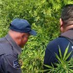 Personal de la Policía Michoacán logró del nueve al 16 de octubre el aseguramiento de 16 motos con reporte de robo, dos plantíos de marihuana con una superficie de mil 804 metros cuadrados, 25 cargadores de distintos calibres, 89 pastillas de clonazepam y 454 gramos de crystal