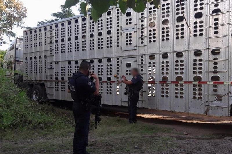 El vehículo y el ganado serán puestos a disposición de la autoridad competente