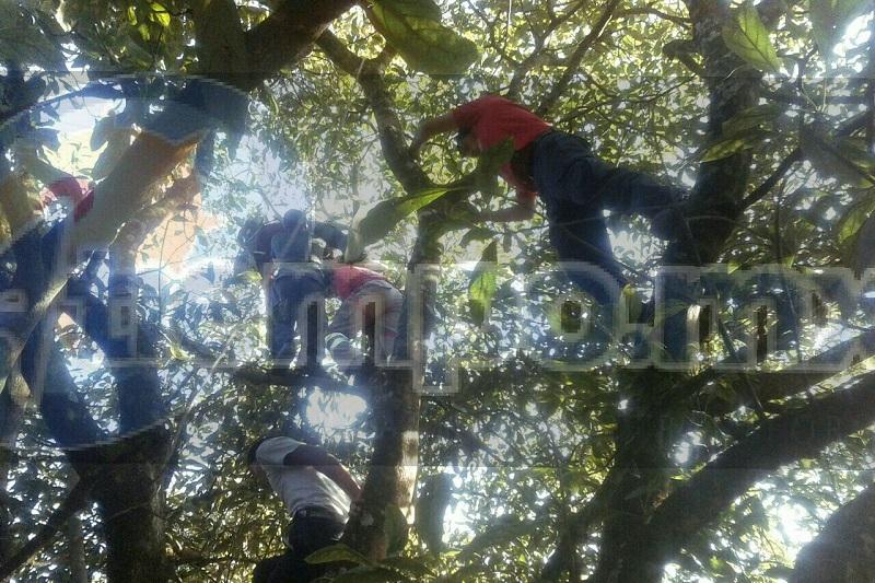 Al arribar el personal al lugar, los cuerpos de emergencia confirmaron que la persona se encontraba cortando aguacate y en un momento determinado tocó los cables de alta tensión para sufrir una descarga, quedando su cuerpo atorado en el árbol sin vida