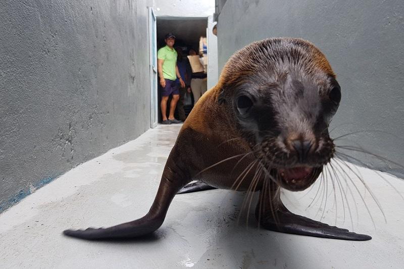 Actualmente, en el recinto faunístico alrededor de 20 especies se encuentran bajo observación y cuidado humano