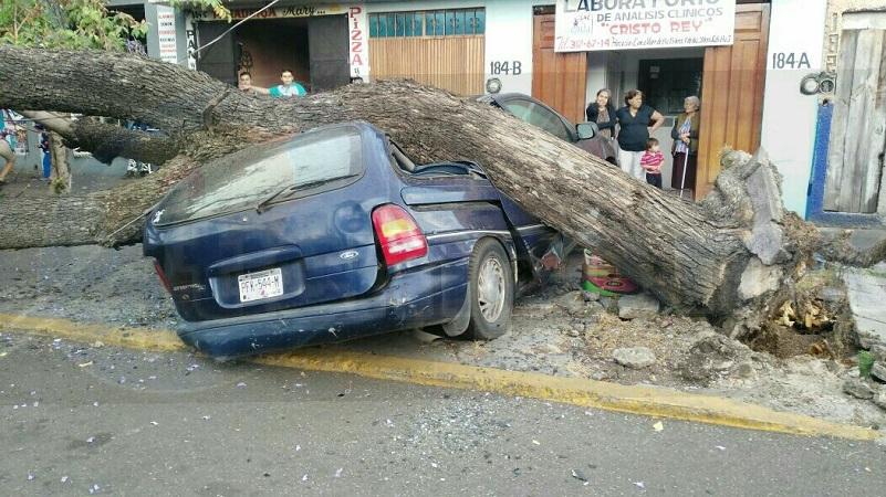 Al lugar de trasladaron unidades de Bomberos Municipales, los cuales confirmaron que se trataba de un árbol de grandes dimensiones, el cual cayó en una camioneta Ford tipo Windstar, de color azul, con placas de esta entidad