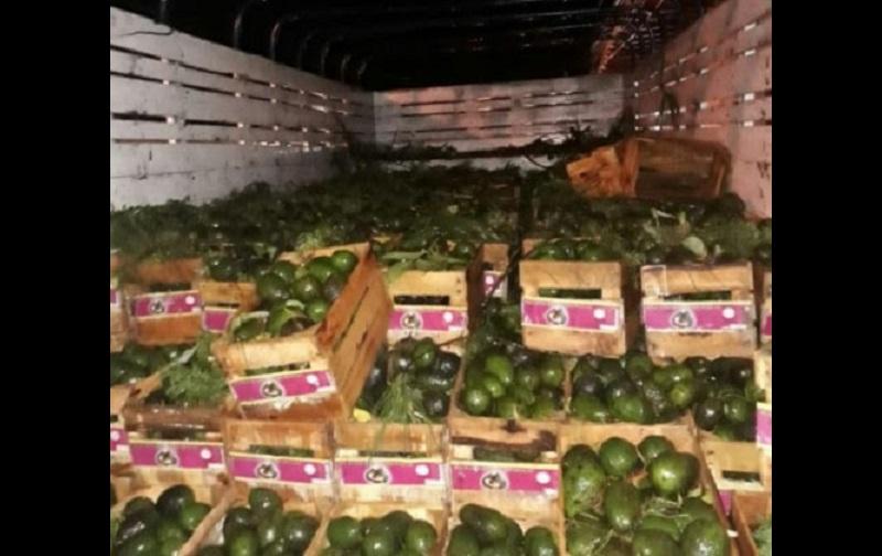 En la parte trasera del camión se localizaron cajas con aguacate, por lo que fue puesto a disposición de la autoridad legal, en espera de que sea reclamado por su propietario