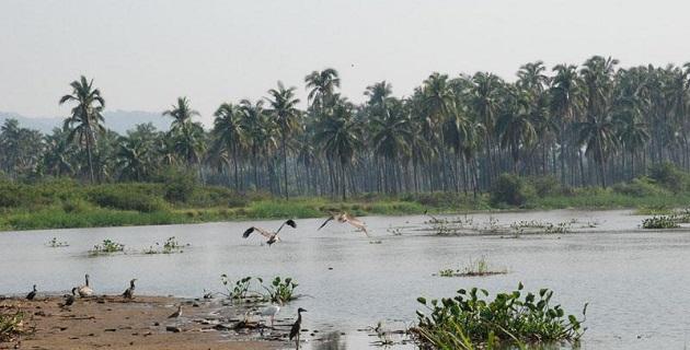 De acuerdo con la Secretaría de Desarrollo Rural, en la región los productores y comercializadores de mango no han dejado de trabajar un solo día