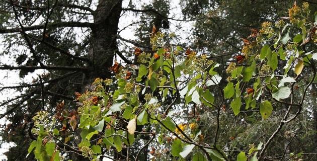 A nivel nacional, la meta de 2014 es incorporar 17 mil hectáreas de bosques y selvas al Pago por Servicios Ambientales