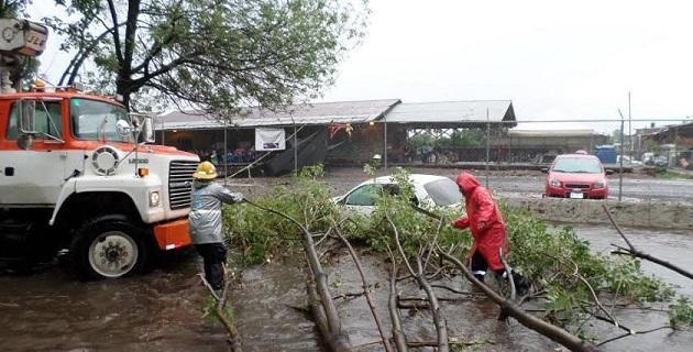 Este jueves, el personal de la dirección de parques y jardines recogió el resto de ramas y troncos caídos a causa de las fuertes lluvias