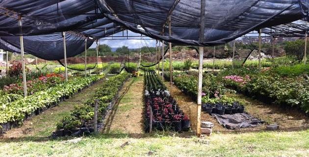 Dan mantenimiento a plazas jardines y camellones de - Mantenimiento parques y jardines ...