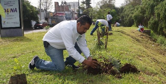 La reforestación es una respuesta a la tala de árboles en la que ha incurrido el Ayuntamiento de Morelia para las obras de modernización del Libramiento Norte, expresó Montañez Espinosa