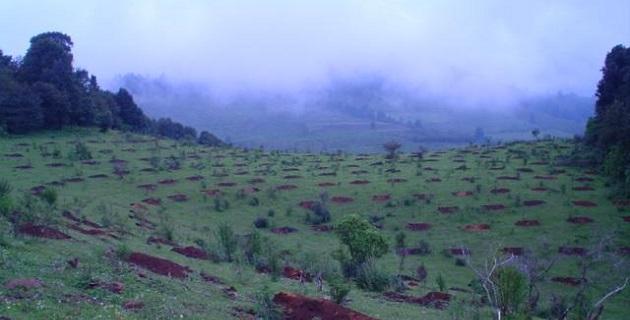 La Comisión Forestal del Estado (COFOM) opera los programas de reforestación principalmente durante los meses de julio y agosto