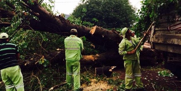 En un predio cercado con malla ciclónica se retiró un árbol de aproximadamente 10 metros de alto por 2 metros de diámetro para removerlo, luego de que el viento y la lluvia provocaron su caída