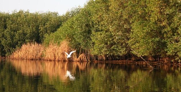 Los manglares se encuentran en 123 países, en regiones tropicales y subtropicales y  se conocen 54 diferentes especies
