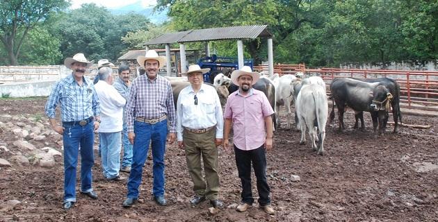 Entrega la Sedru 22 sementales bovinos de alta calidad genética para mejorar el hato ganadero de la región