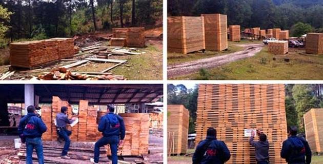 También se incautaron seis maquinarias forestales e impuso una clausura total temporal en el municipio Hidalgo, todo lo cual debido a que no se contaba con la acreditación de legal procedencia del producto forestal