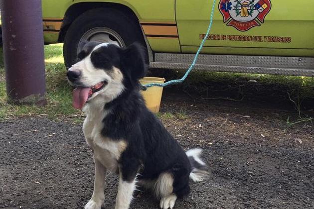 Los perros desempeñarán una labor fundamental en las acciones de búsqueda y rescate de personas en caso de accidentes o desastres naturales