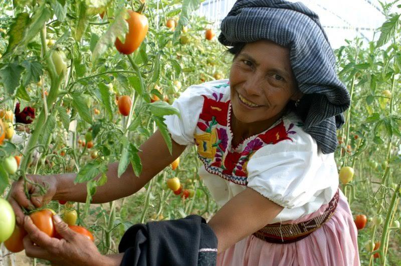 Rodríguez López mencionó que para este año se pretende apoyar a una población aproximada de 113 mil productores, ya sean personas físicas o morales