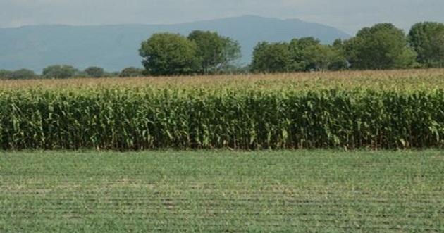 Se han recepcionado poco más de 600 solicitudes en ventanilla para el sector agricultor