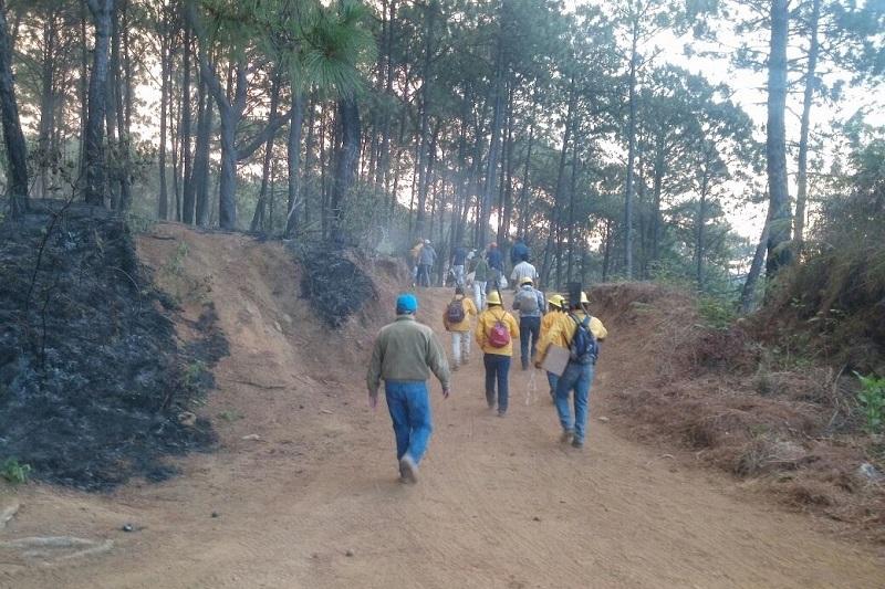 El reporte preliminar estima que las llamas alcanzaron un promedio de 250 hectáreas