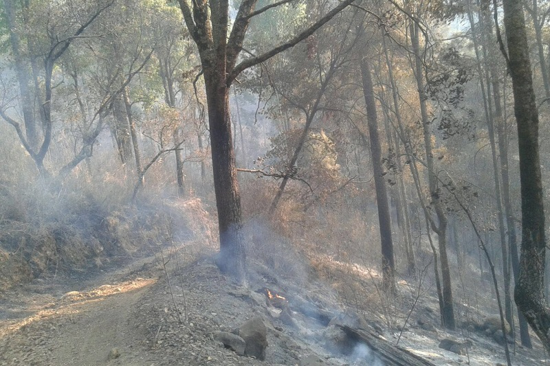 El Coordinador de Protección Civil municipal, Eduardo Ramírez Canals, especificó que si bien el incendio fue controlado, continúan atentos ante cualquier situación