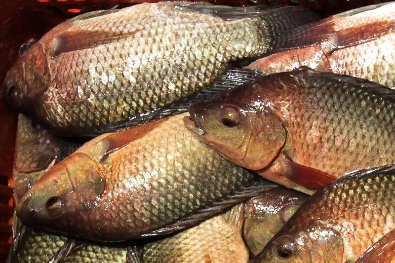 El gobierno federal aportará diez millones de pesos a CESAMICH para reducir enfermedades en especies acuícolas