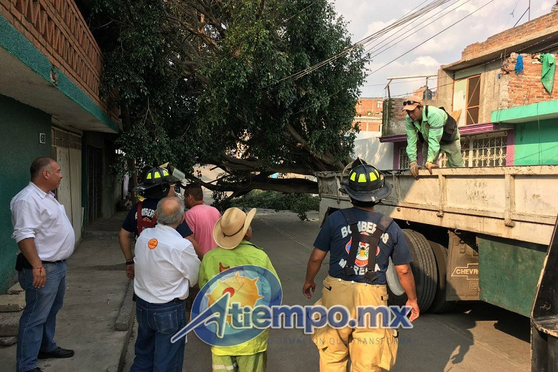 A su paso, el gran árbol arrastró y arrancó varios cables de energía eléctrica, por lo que fue necesaria la presencia inmediata de los cuerpos de rescate y la CFE (FOTOS: FRANCISCO ALBERTO SOTOMAYOR)